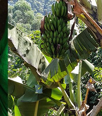 market-garden-evergreen-africa